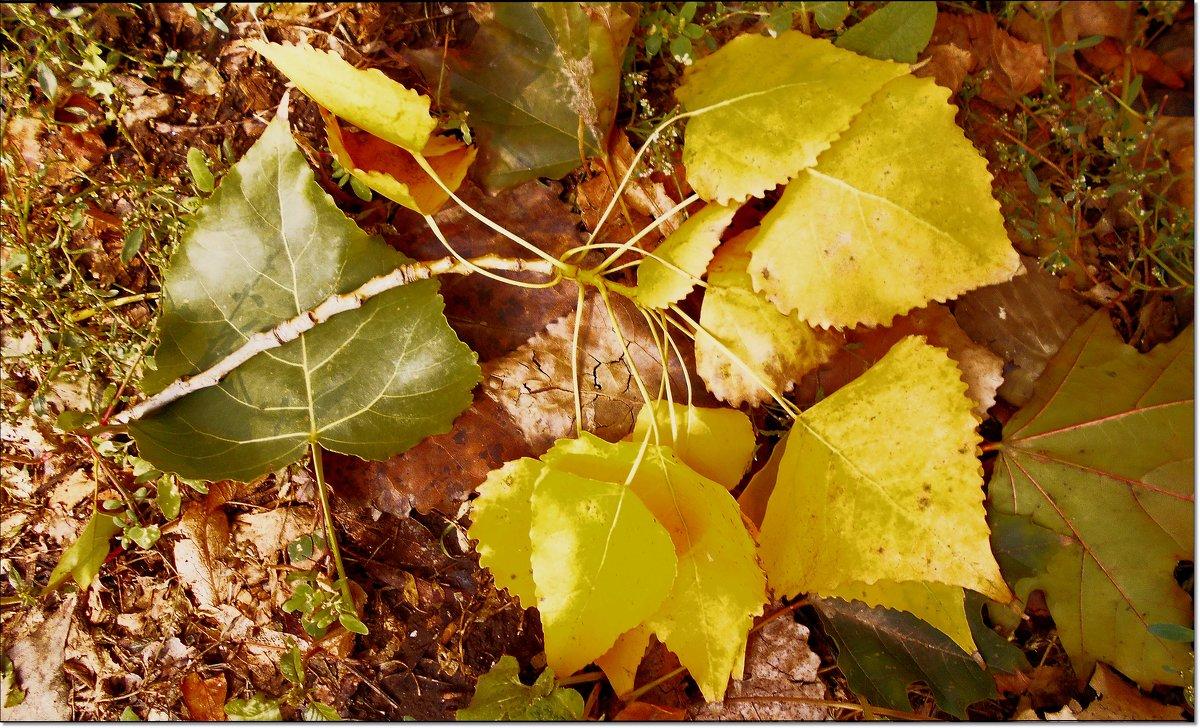 Прячется солнце в осенней листве - Людмила