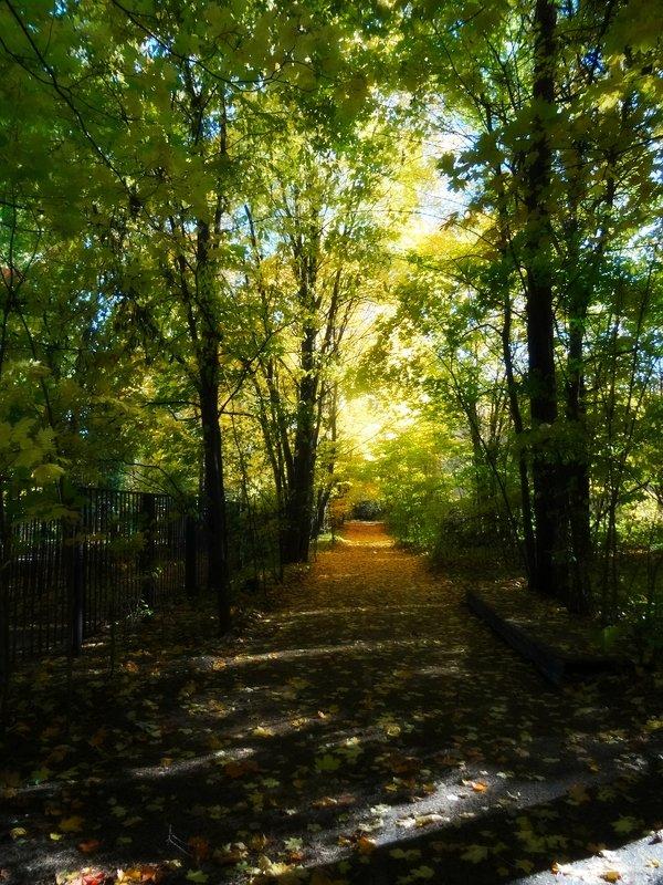 Осенняя дорога - Наталия Короткова