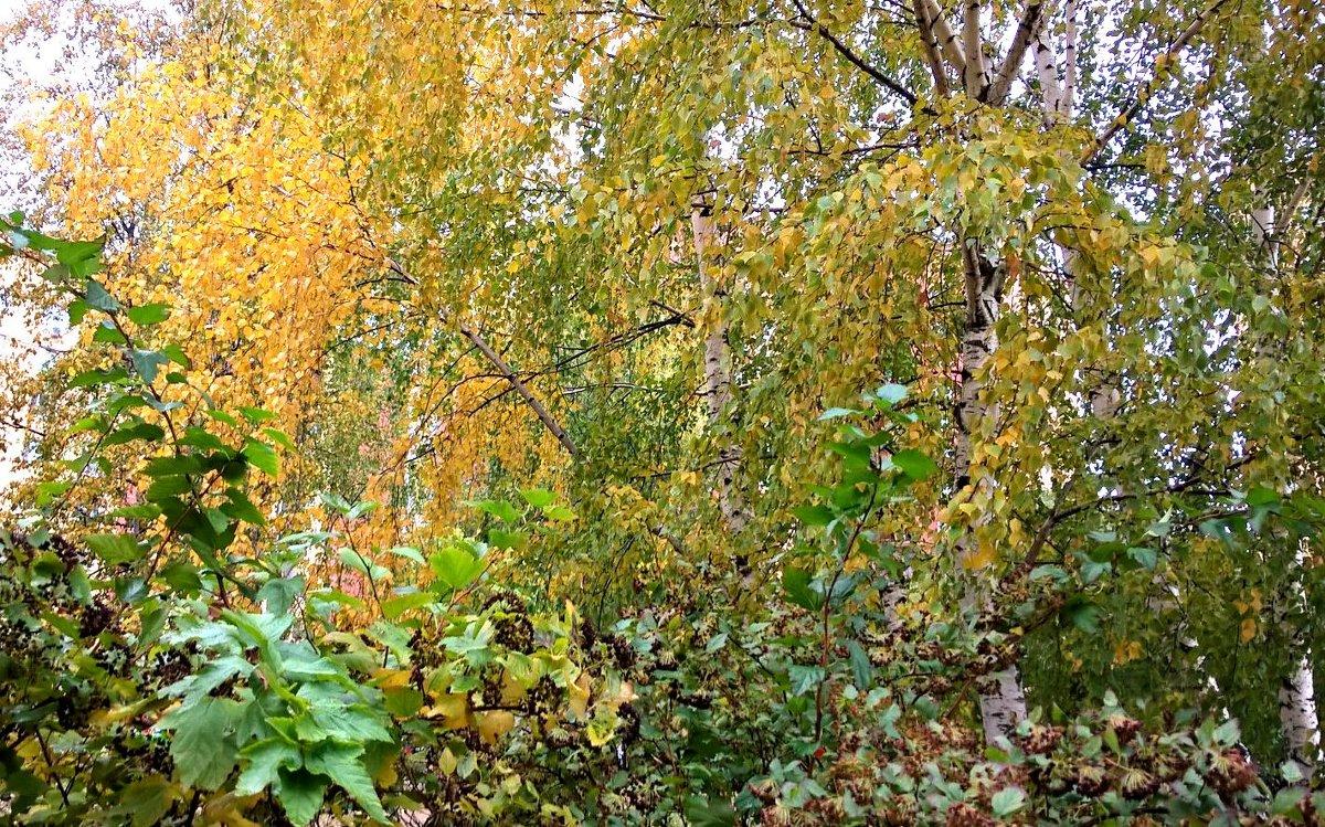 Осенняя картина - Елена Семигина