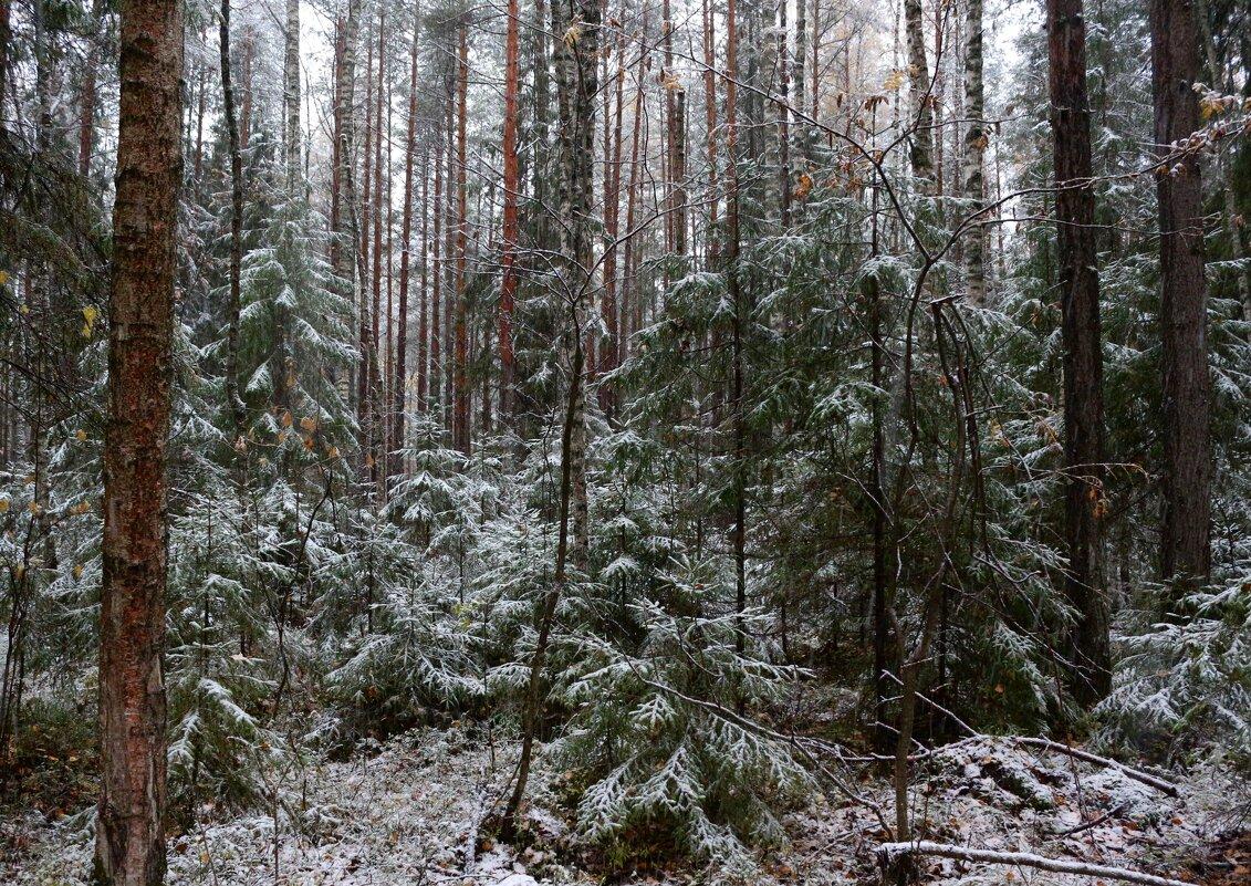 Первый снег - Марина