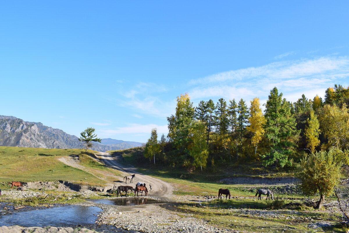 кони - nataly-teplyakov