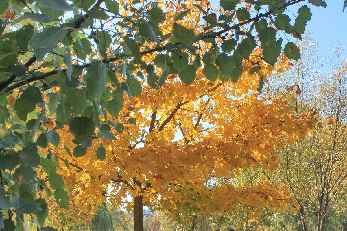Киев.Осень - tina kulikowa