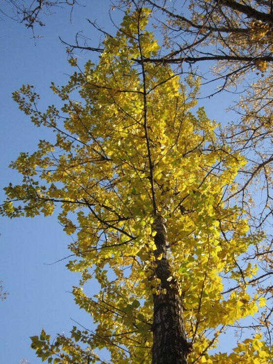 Жёлтое на голубом - Дмитрий Никитин