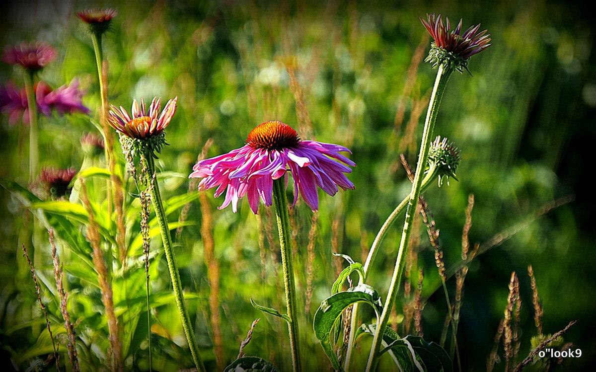 красота от природы - Олег Лукьянов