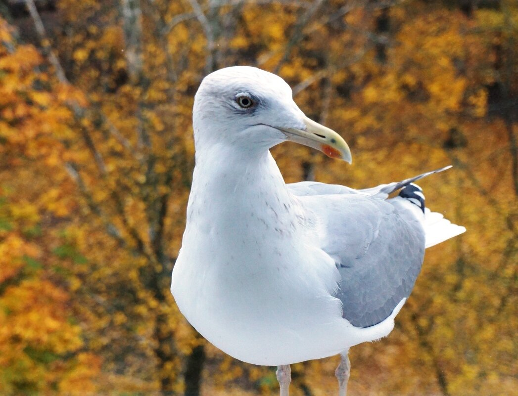 Осенняя чайка - Александр Михайлов