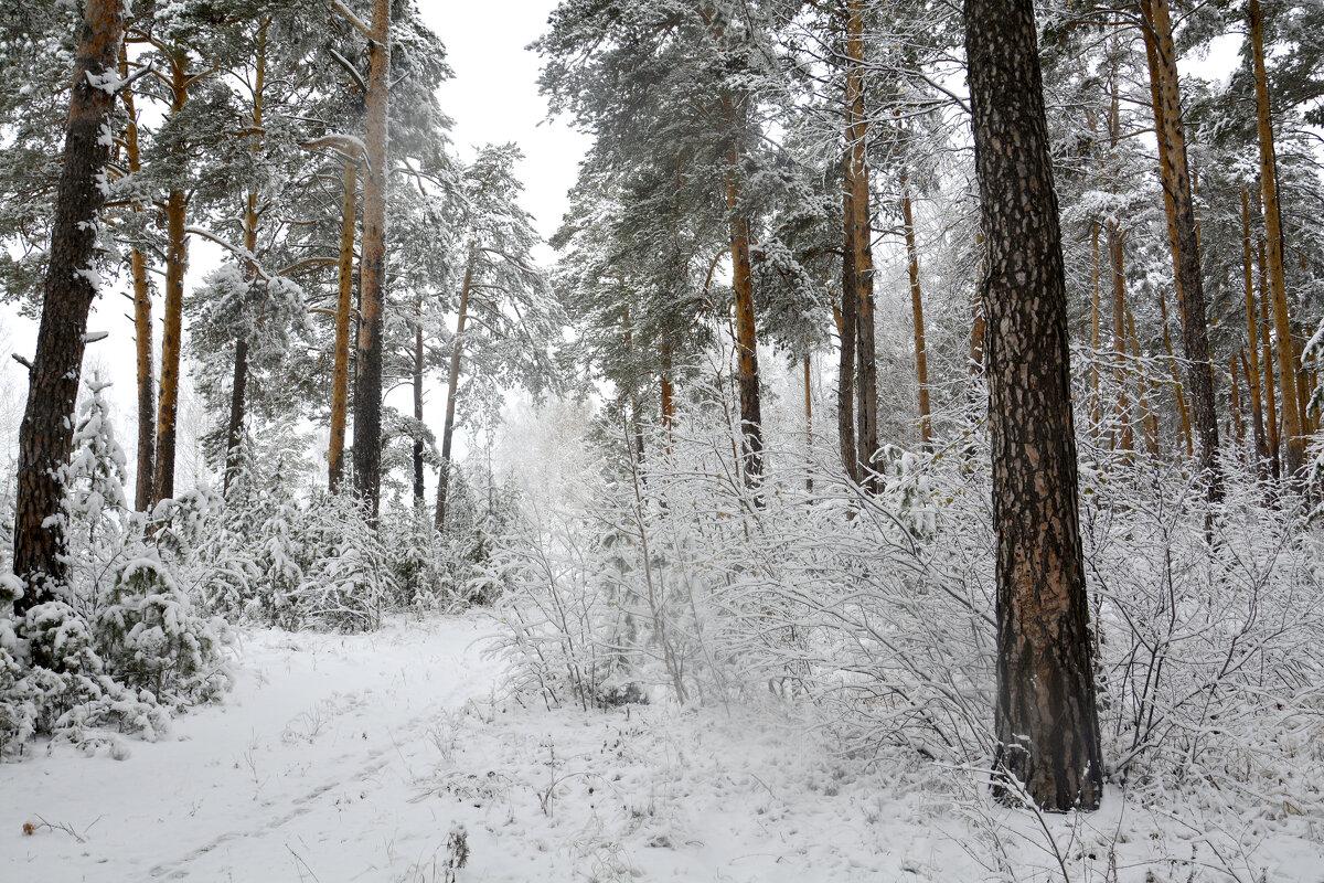Первый снег... - Дмитрий Петренко
