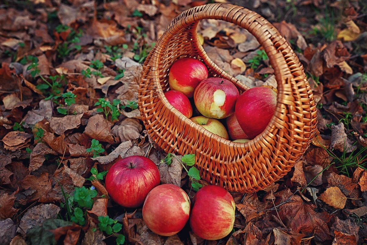 Яблочное настроение! - Надежда Антонова