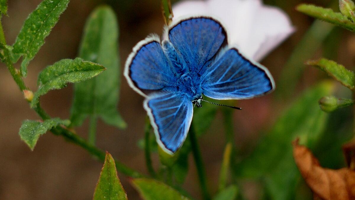 опять бабочки...14 - Александр Прокудин
