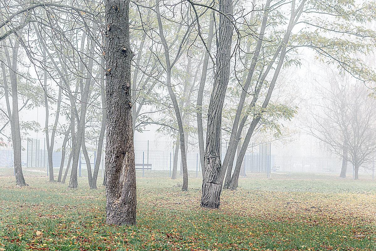 Туман. - Владимир Ф