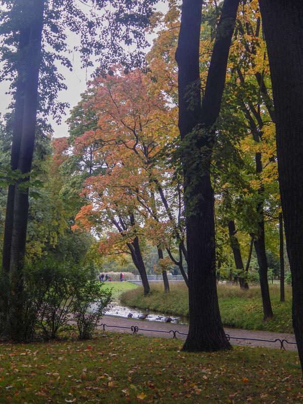 Санкт-Петербург. Таврический сад. - Лариса (Phinikia) Двойникова
