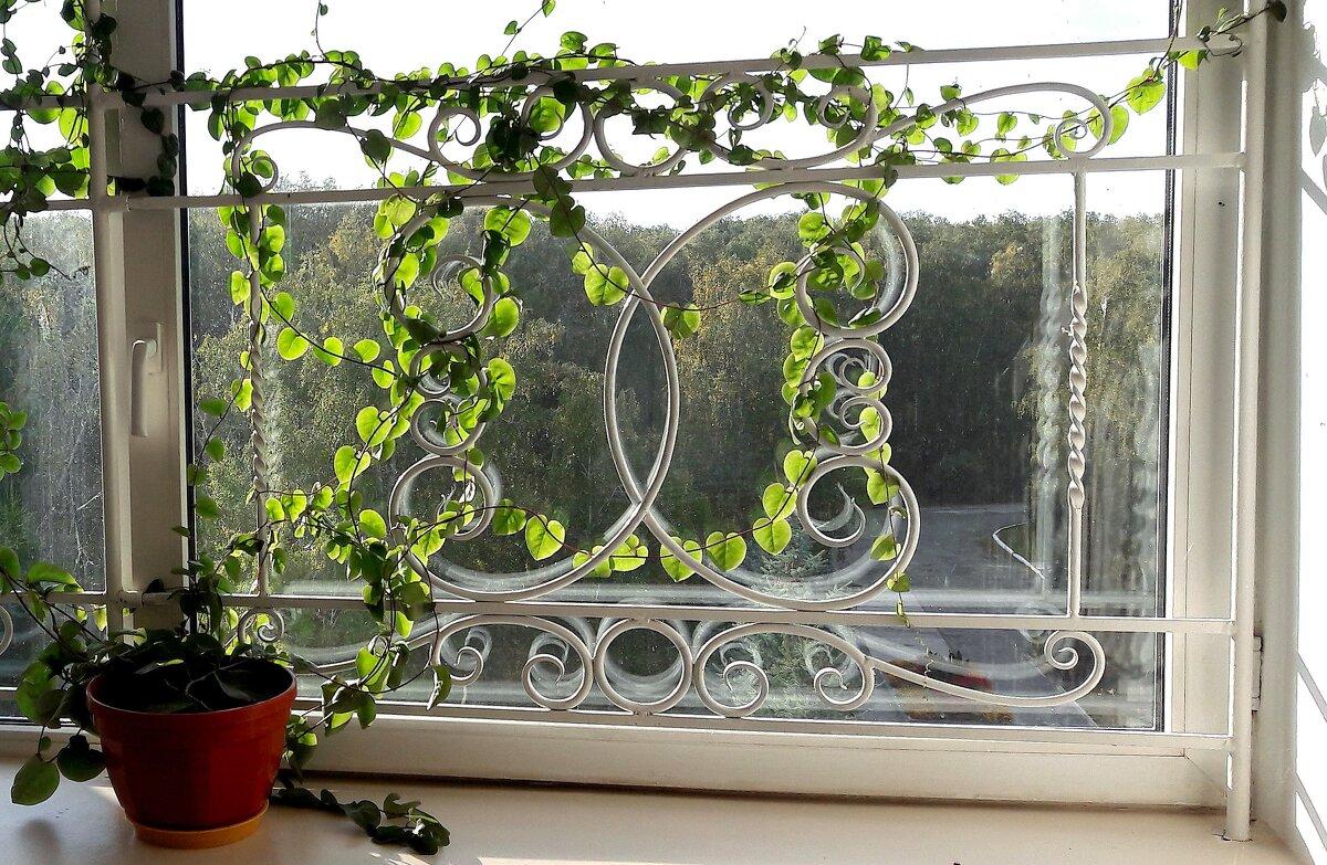 Симпатичненько смотрится окно... - Зинаида Каширина