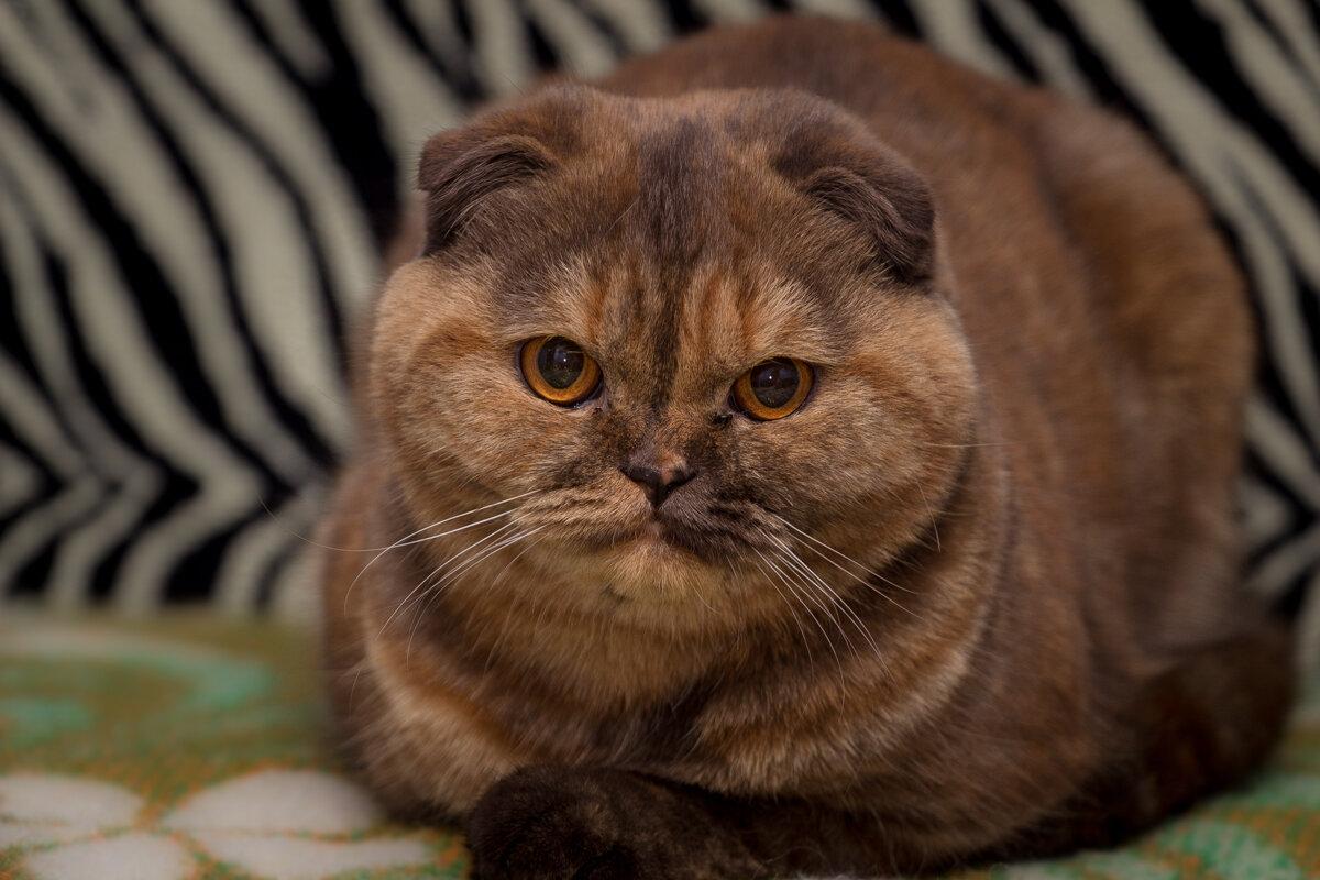 Ищу  достойного кота для совместного досуга. - Александр