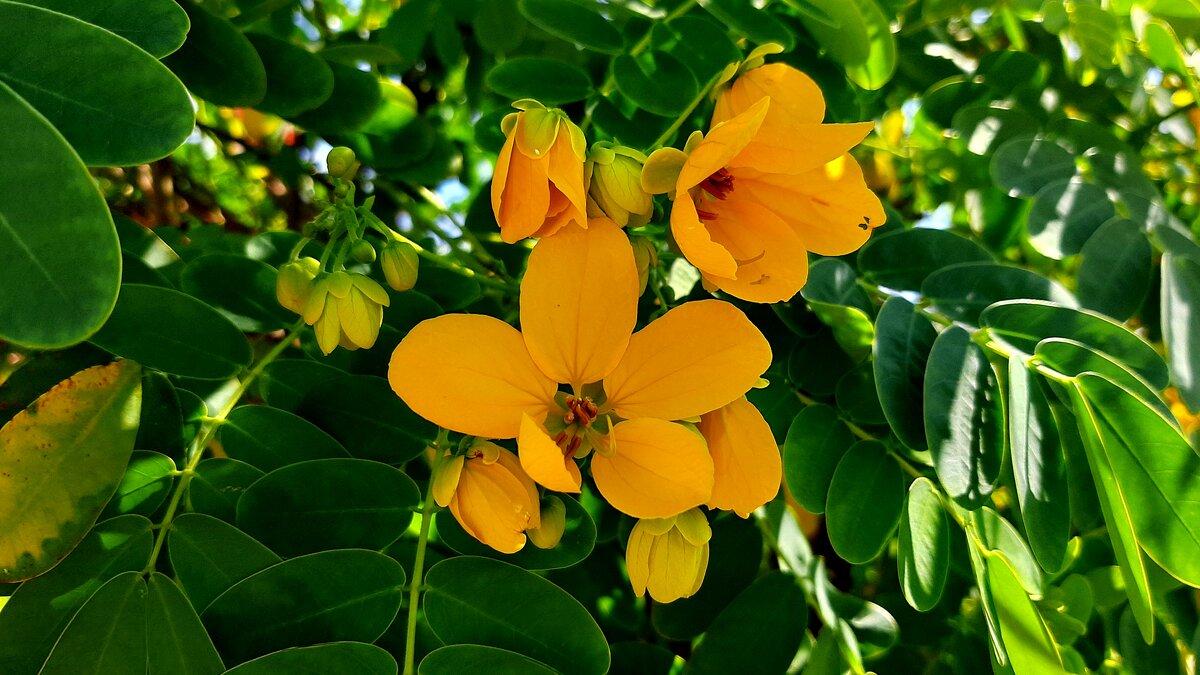 Прекрасный цветок - Юлия Закопайло