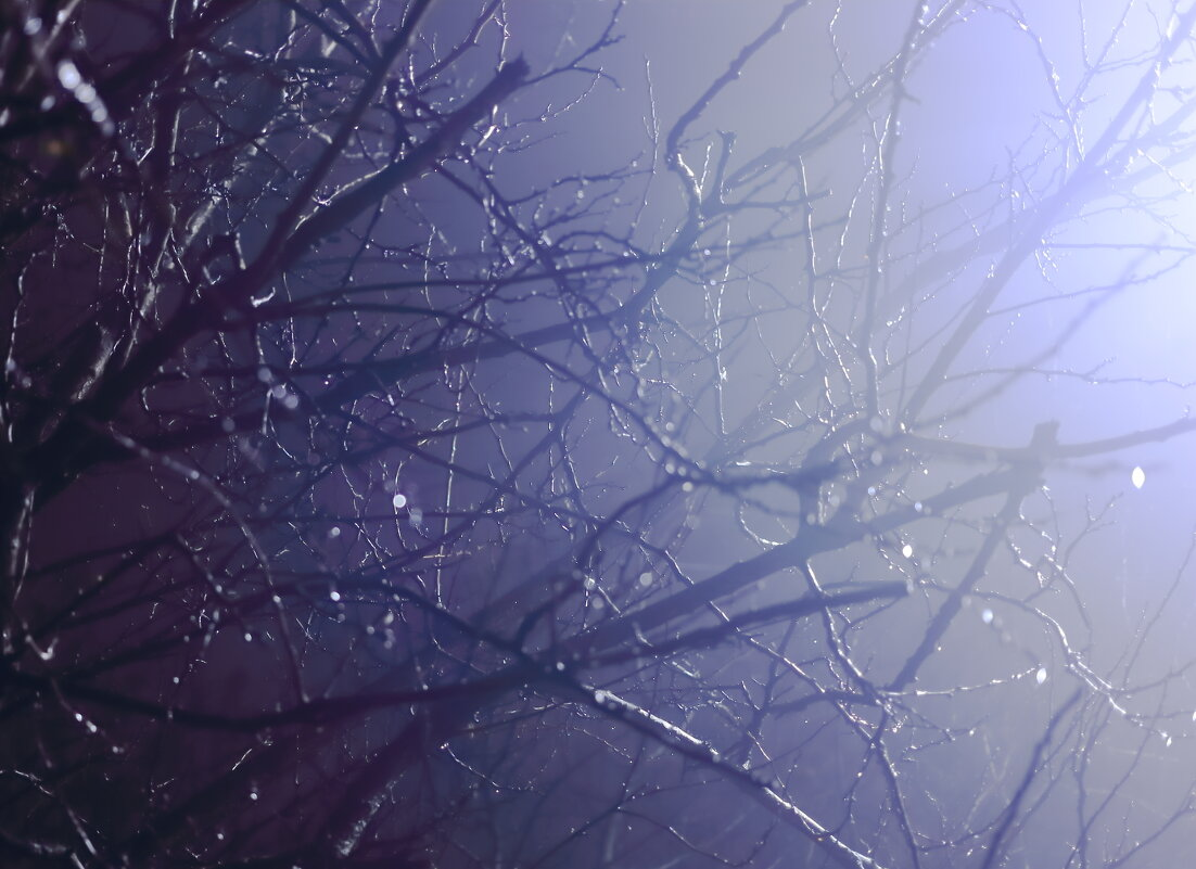 Свет в ночи - Юрий Гайворонский