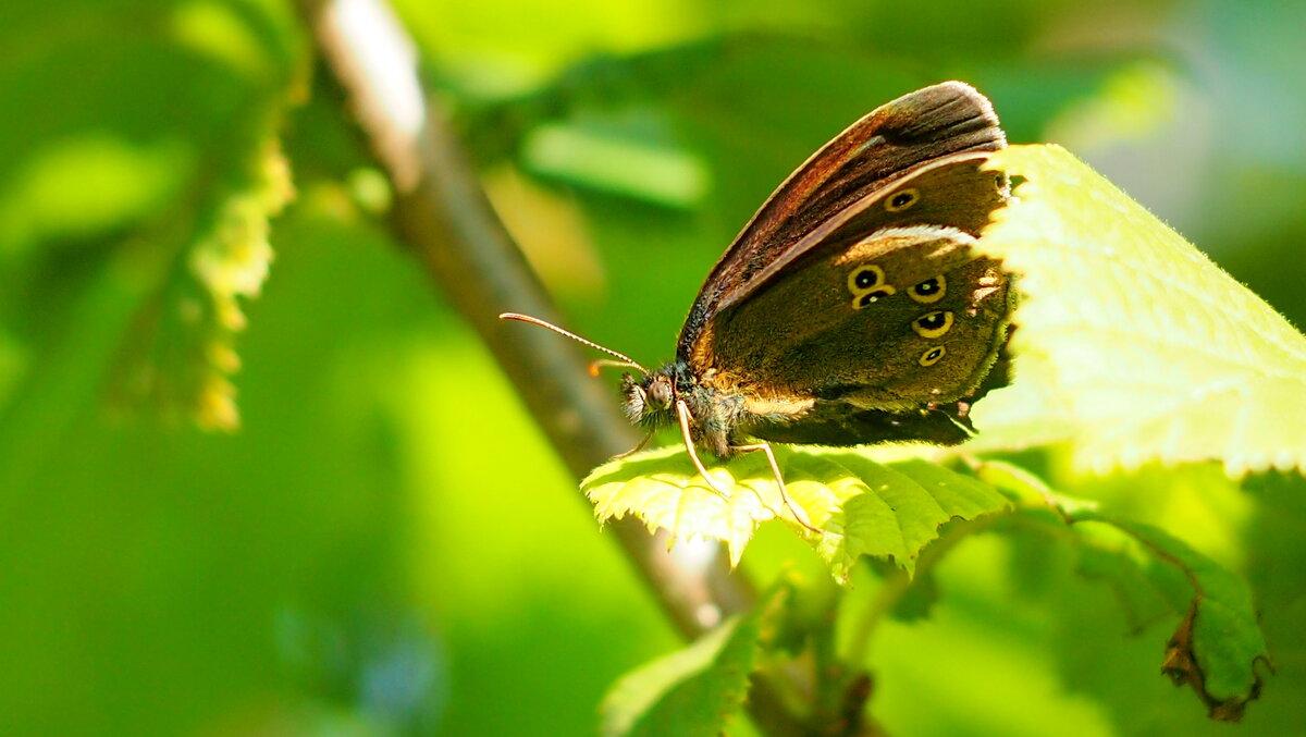 опять про бабочек...58 - Александр Прокудин