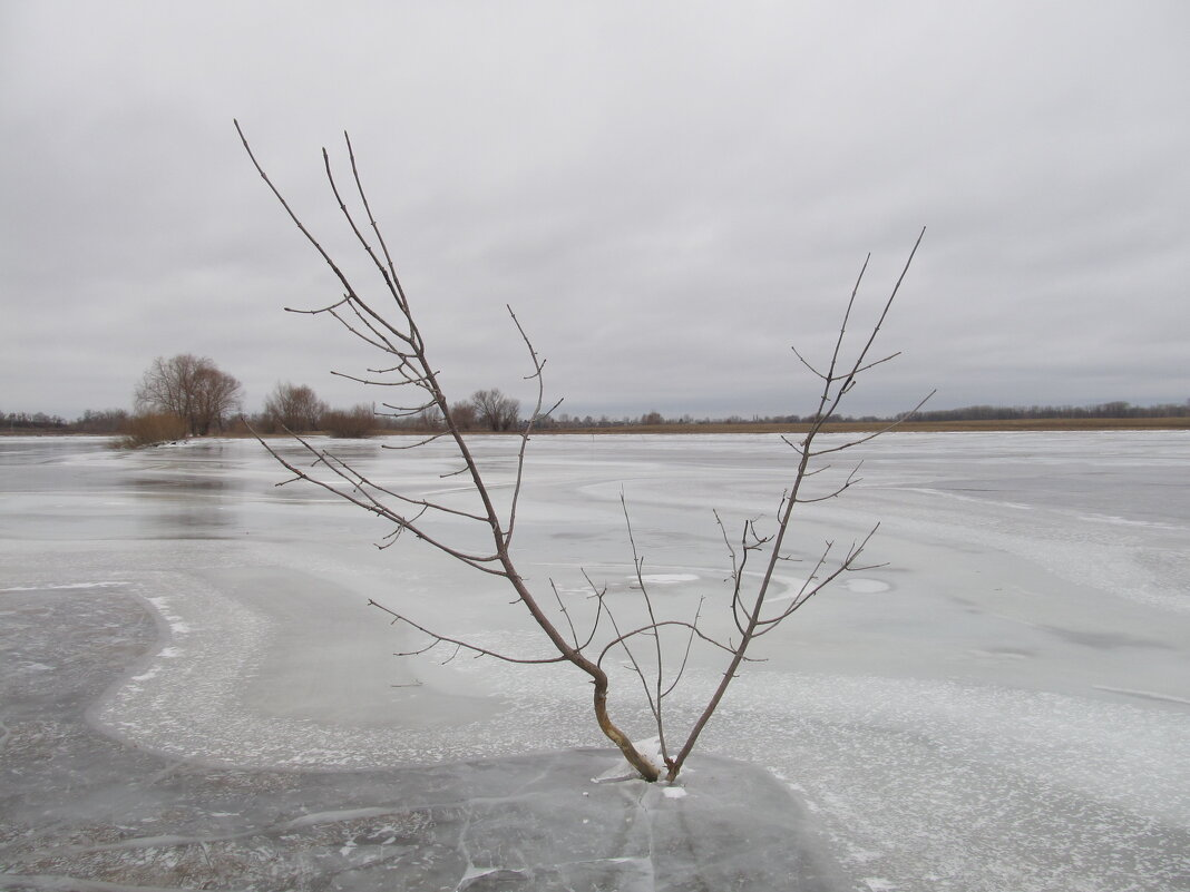в ледяном плену - Елена Шаламова
