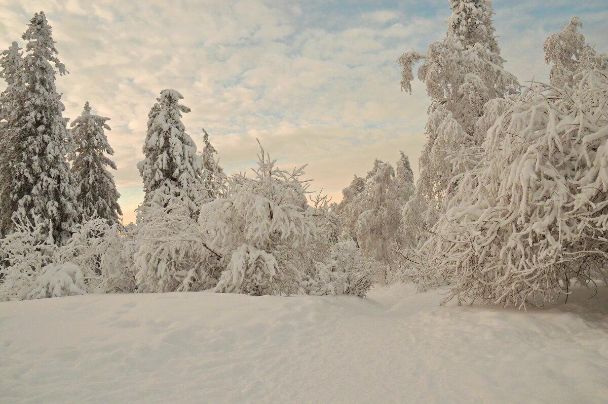 У зимы немного красок, но рисует она великолепно! - Galina Serebrennikova