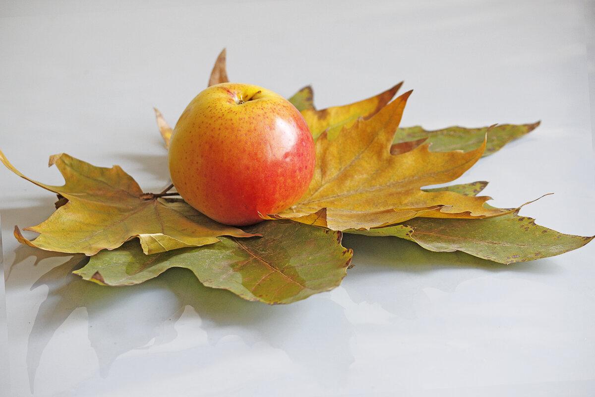 Осенние краски - Ольга Акимова