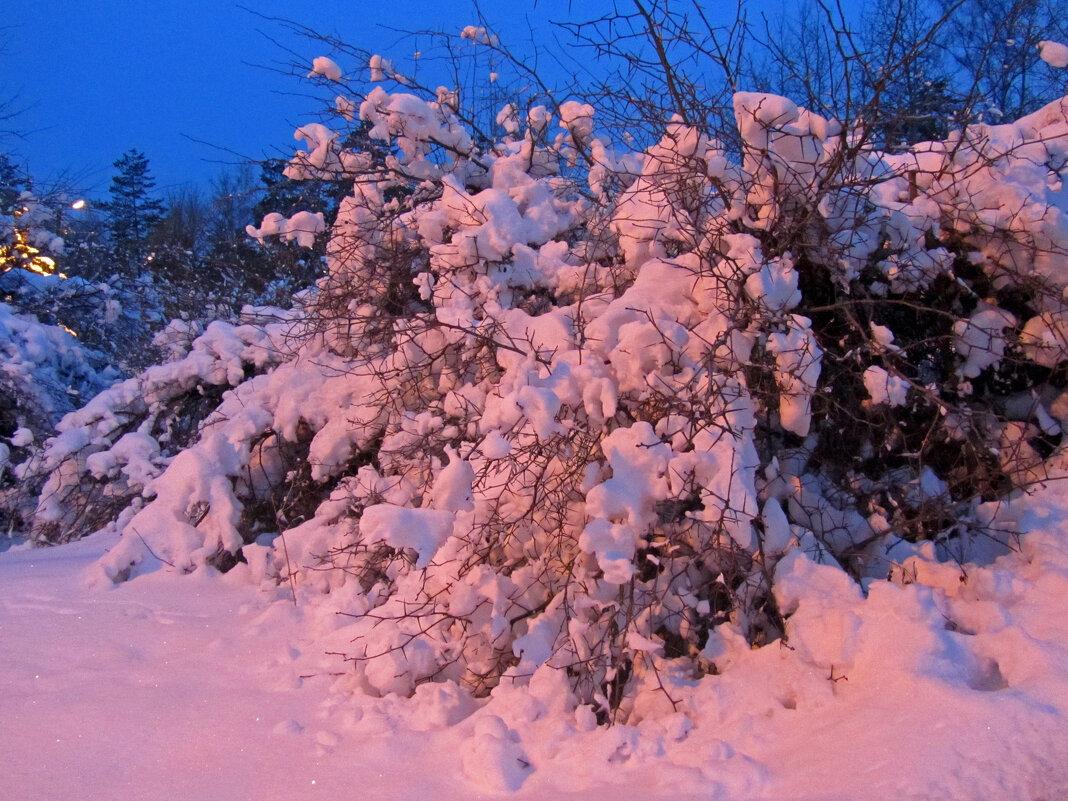 Снежная зима - Нина Синица