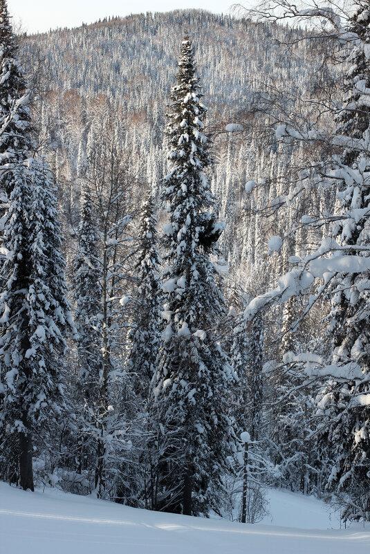 Зима - Дмитрий Арсеньев