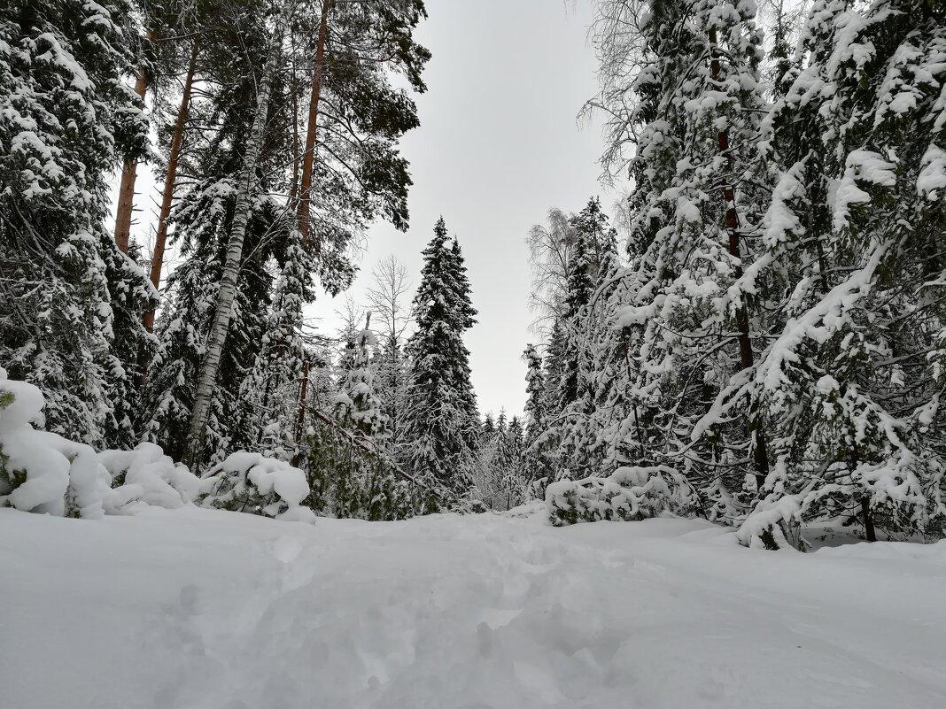 Зимний лес - Ruslan