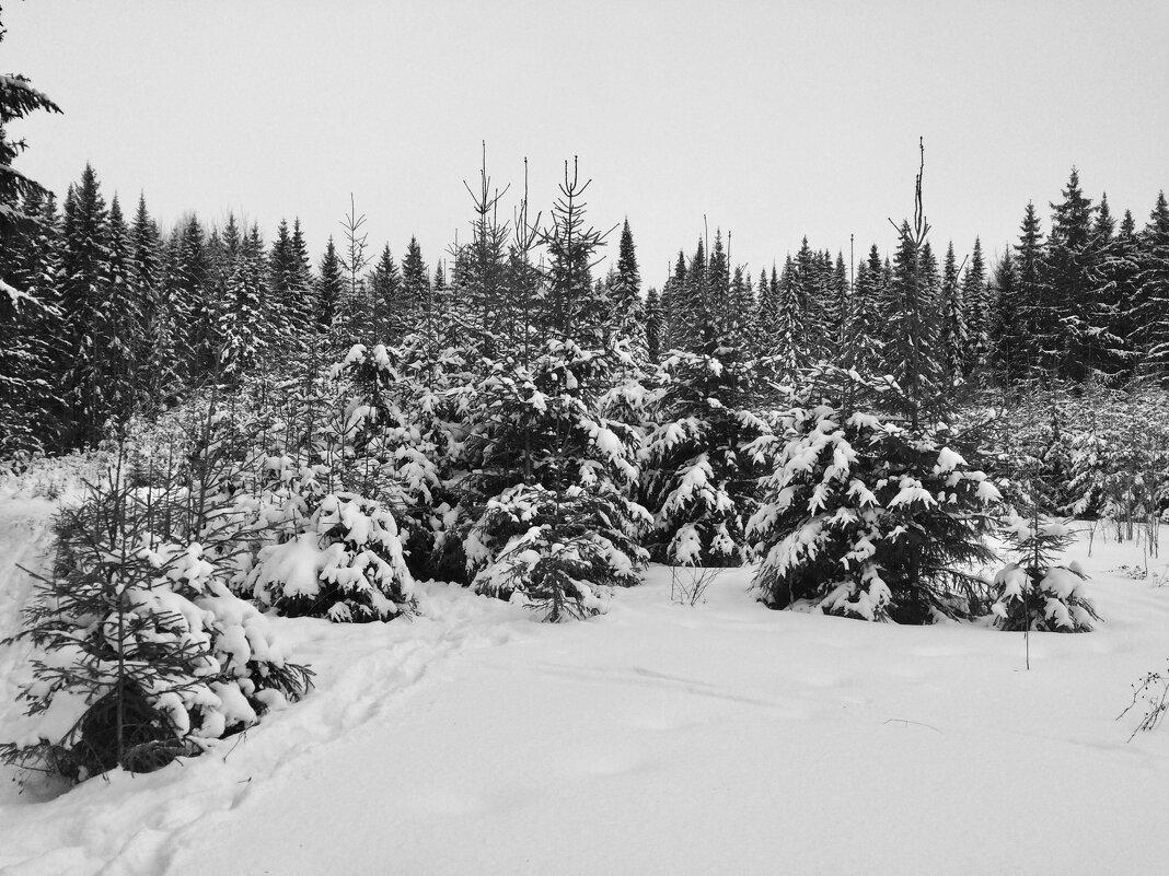 Снег выпал только в январе) - Татьяна