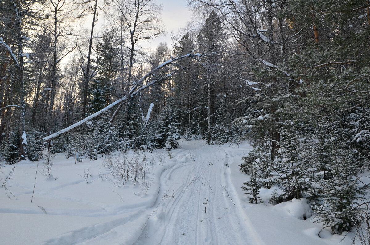 В январском лесу - Татьяна Соловьева