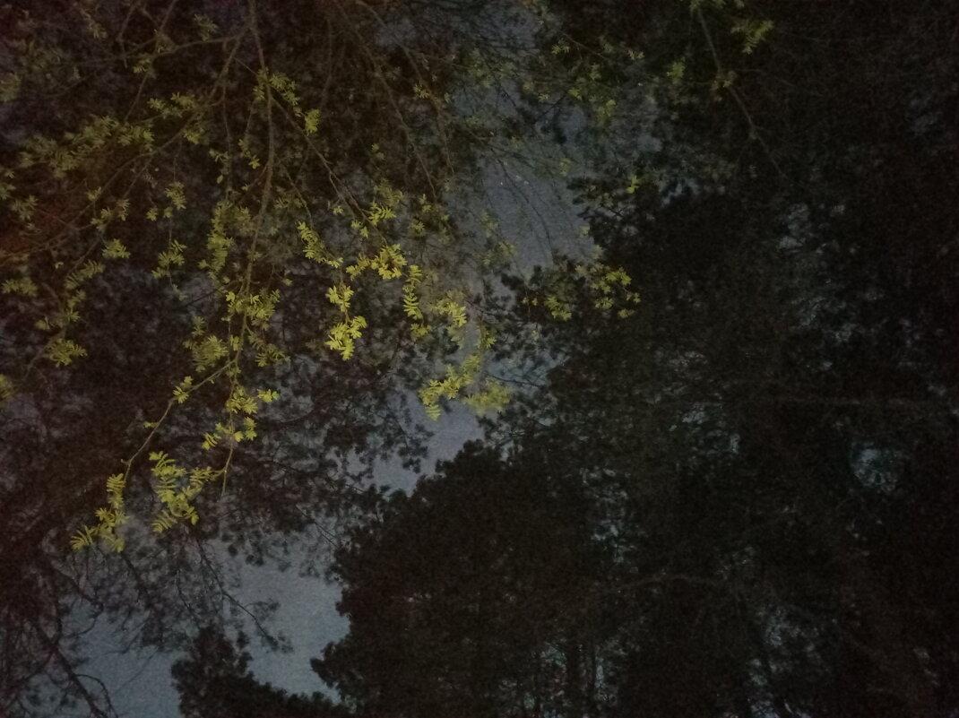 Тёмный лес - KirillStoyanov