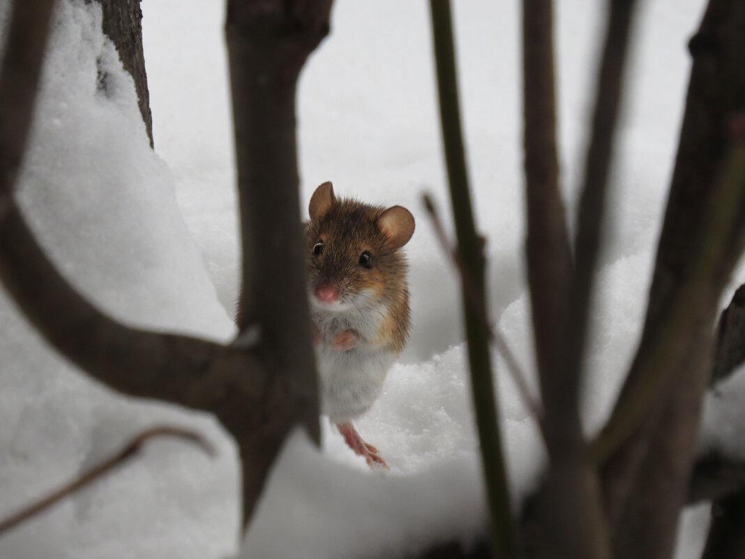 Я мышка-норушка, а вы кто? - Ната Волга