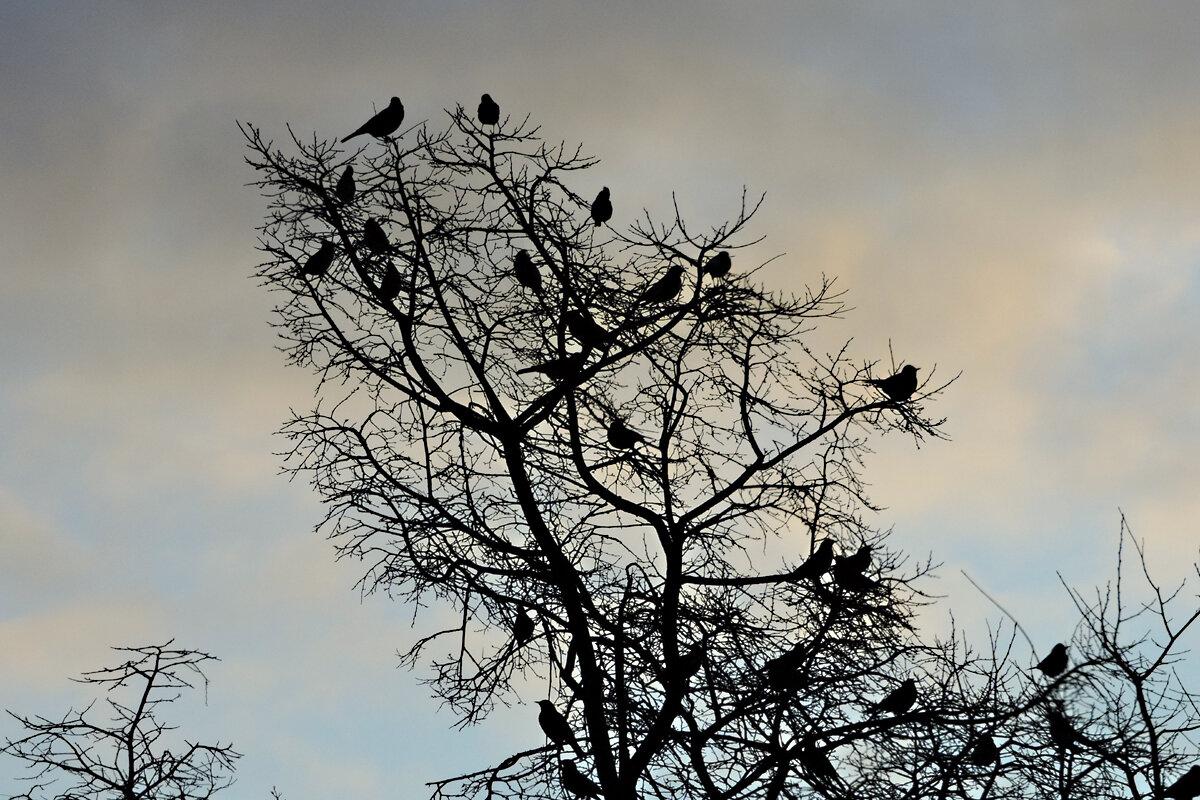 Птицы на дереве - Андрей