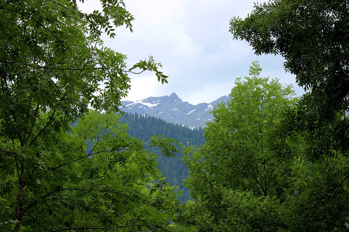 В горах Абхазии - Татьяна Пальчикова