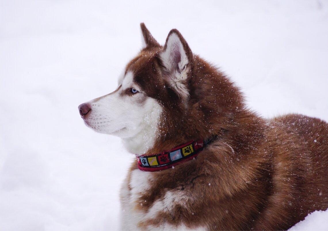 Профиль на фоне снега - Наталия Григорьева