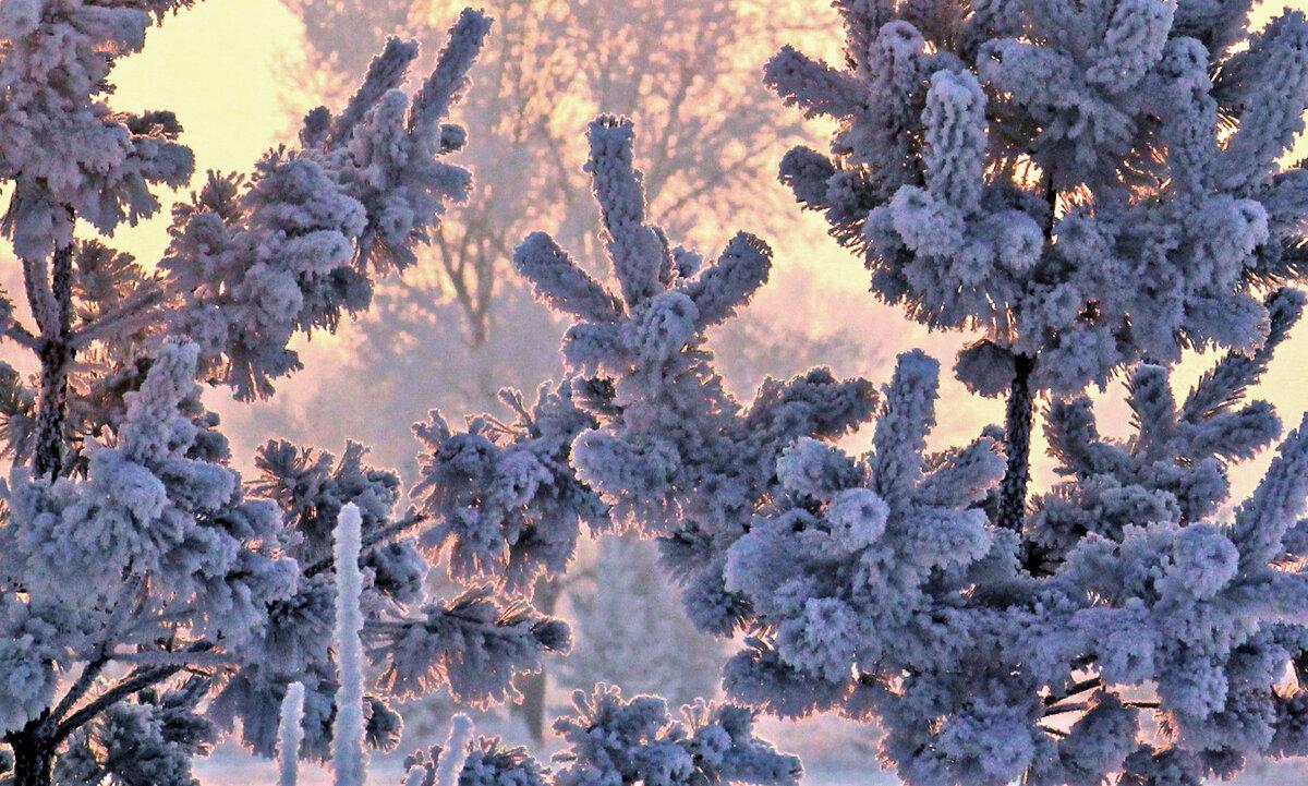 Цветные сны Зимы - Екатерина Торганская
