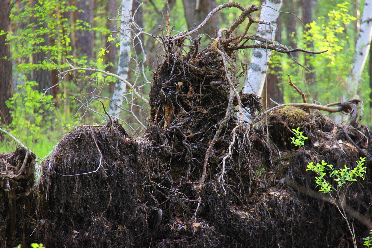 Лесной житель. ЛЕШИЙ)))) - Штрек Надежда
