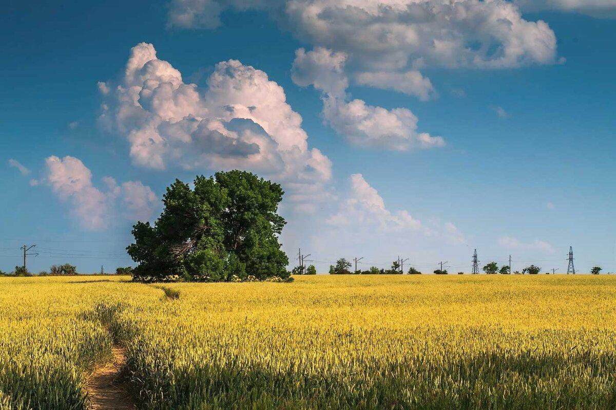 Тропинка в поле - Евгений Кирюхин