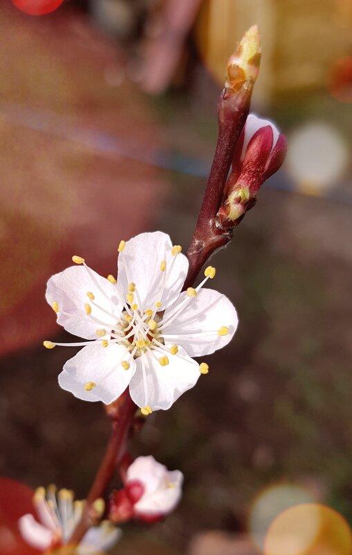 Летом будут абрикосы - Валерий Ткаченко