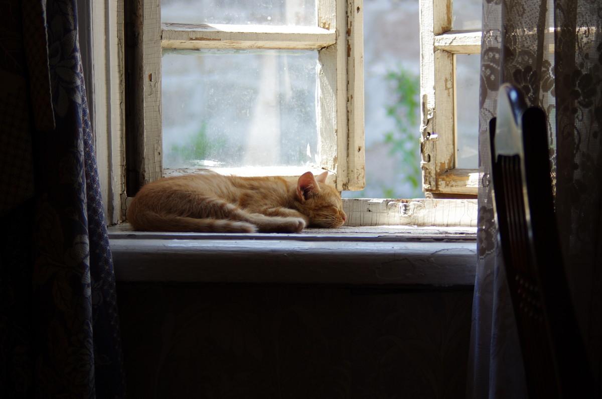 кошка на окошке - Андрей Медведев