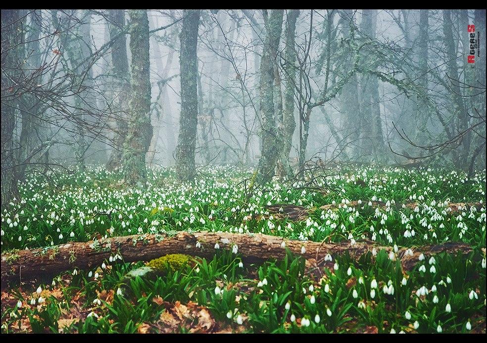Рай в лесу - Сергей Радин