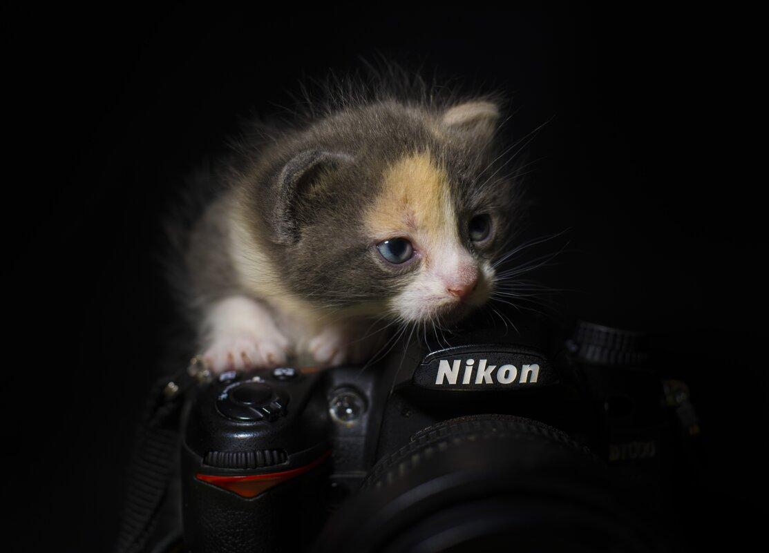 Юный фотограф - Александр Довгий