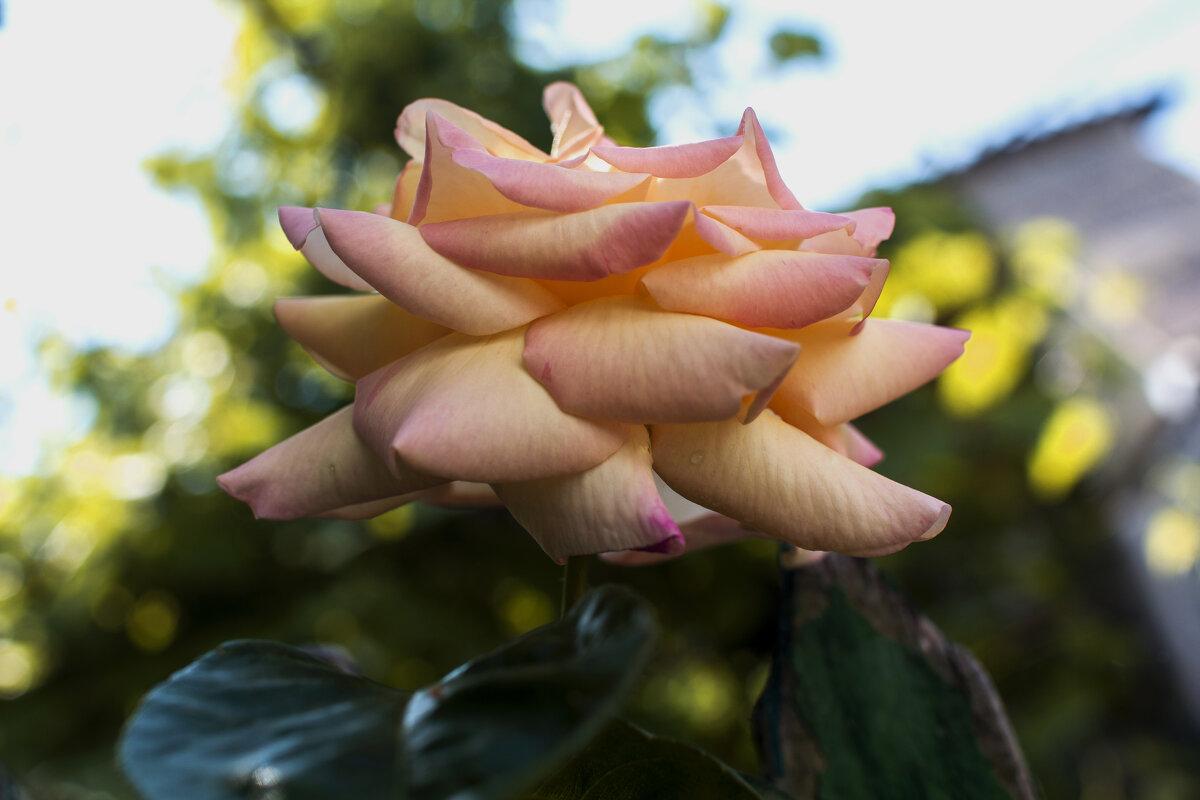 Наши цветы - Валентин Семчишин