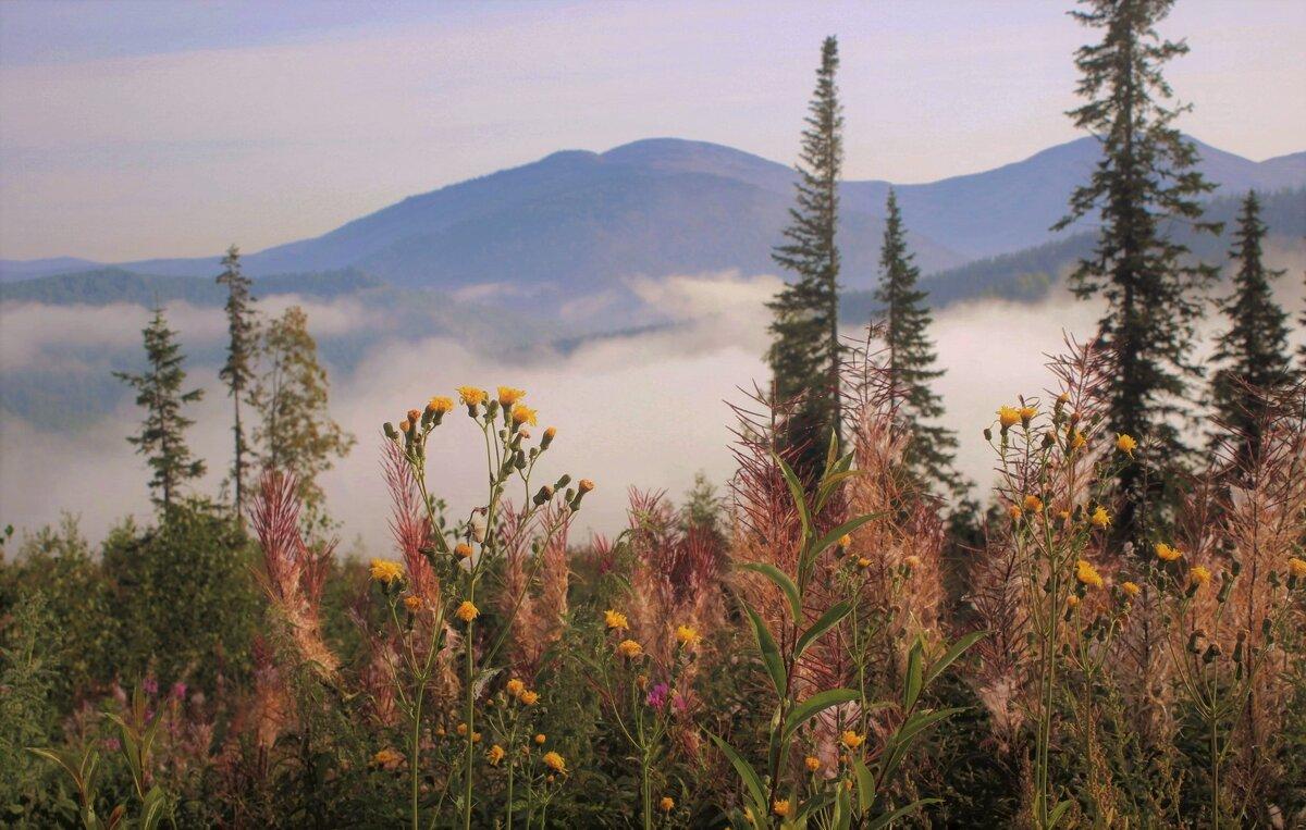 Утро в горах - Сергей Чиняев