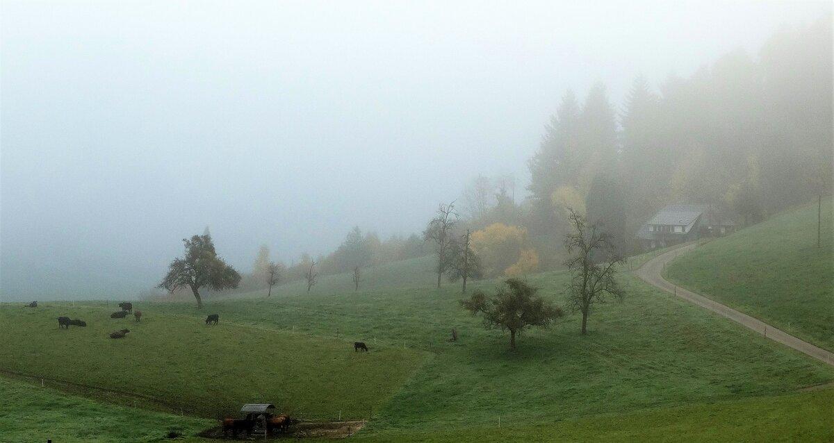 В утреннем тумане... - Elena Ророva