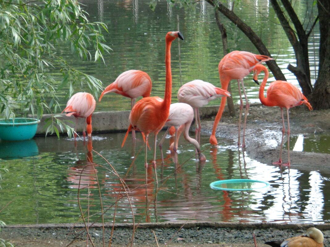 Фламинго - <<< Наташа >>>