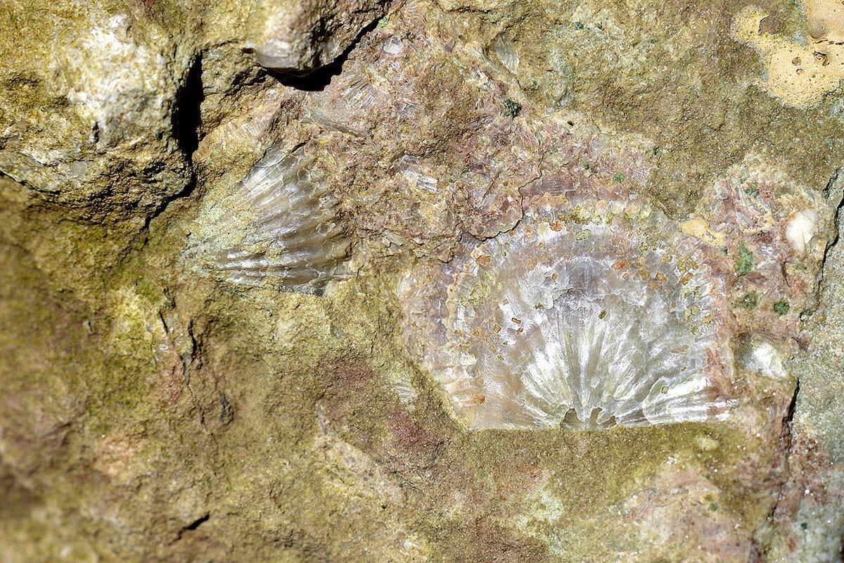 Натюрморт созданный природой 450 миллионов лет назад. - Master
