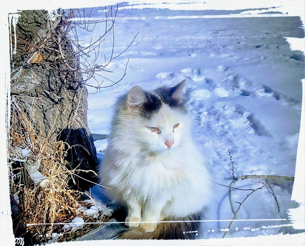 Снежок - Андрей Хлопонин