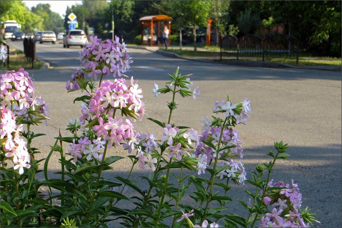 Течёт июльская жара... - Татьяна Смоляниченко
