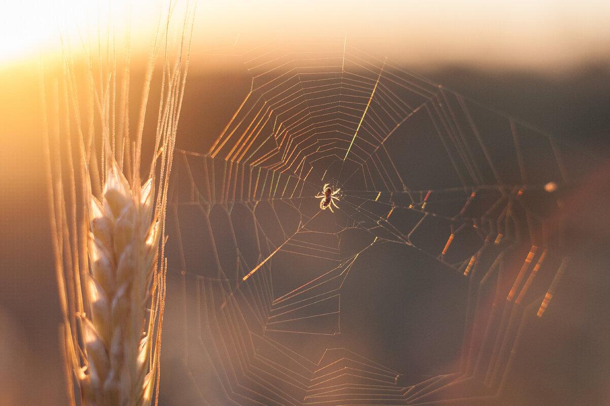 Вечер паука - 2 - Pavel Stolyar