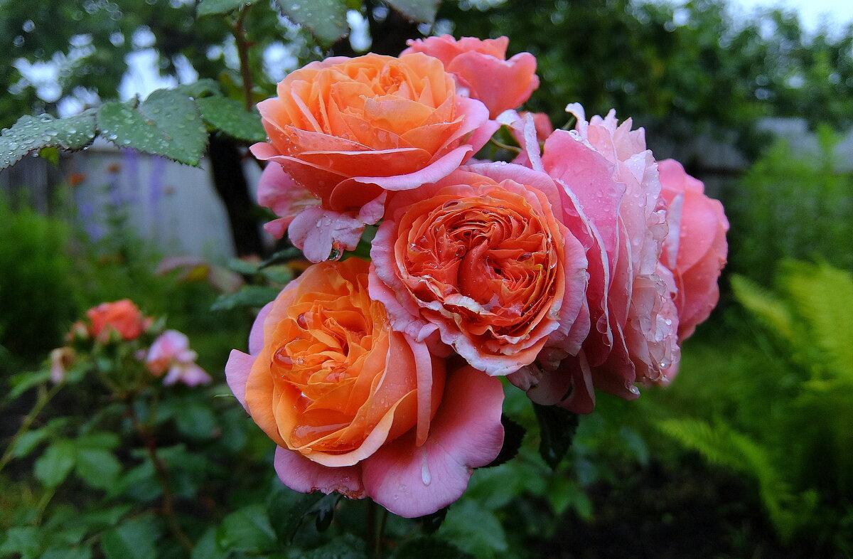 В бутоне розы-бесконечность и нежных лепестков харизма,закрученных спиралью в вечность! - Люба
