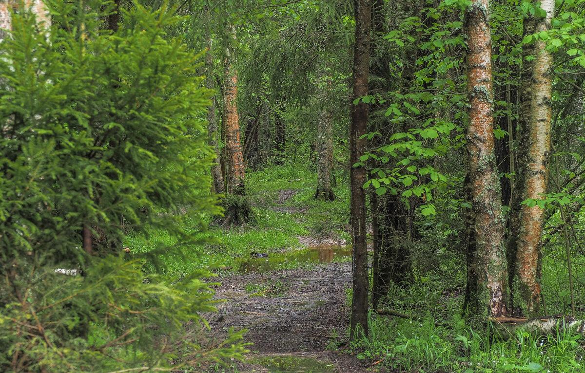 По Лесным Дорожкам - юрий поляков
