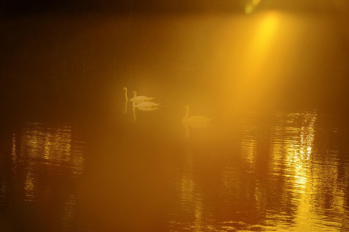 Лебединое озеро... (2) - Влад Никишин
